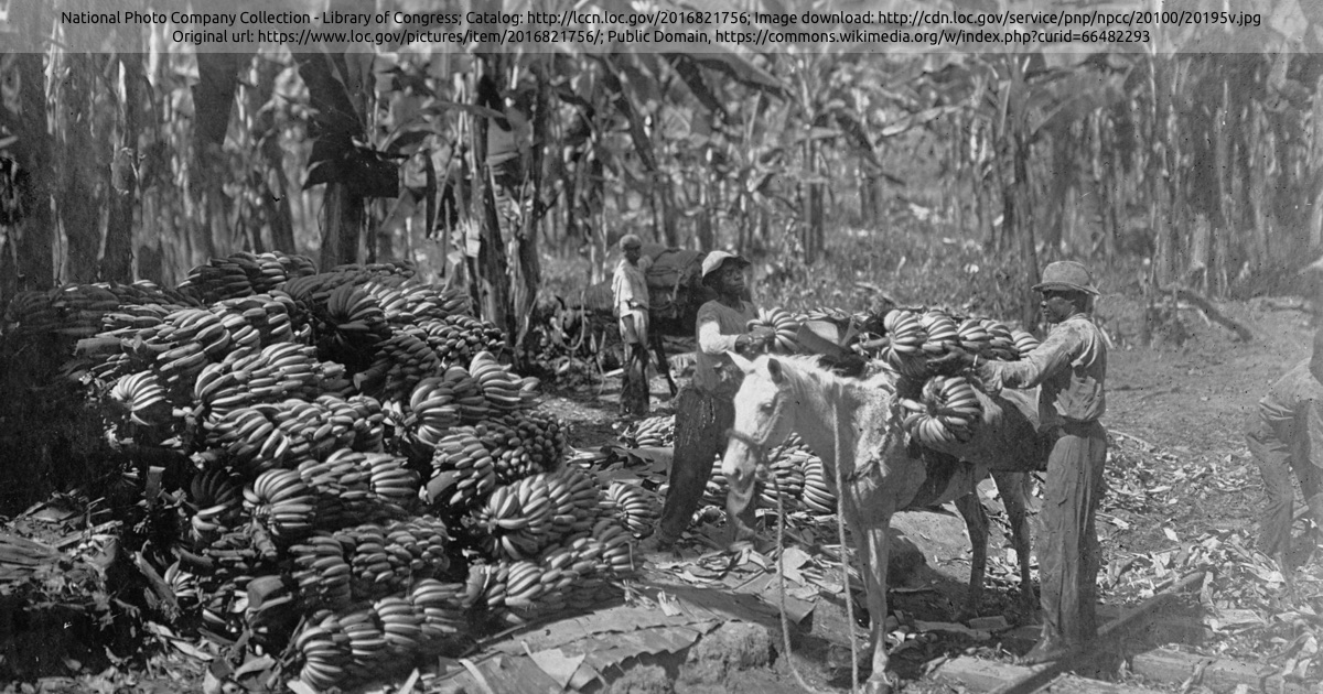 Arbeiter mit Lasttier auf einer Bananenplantage in Costa Rica