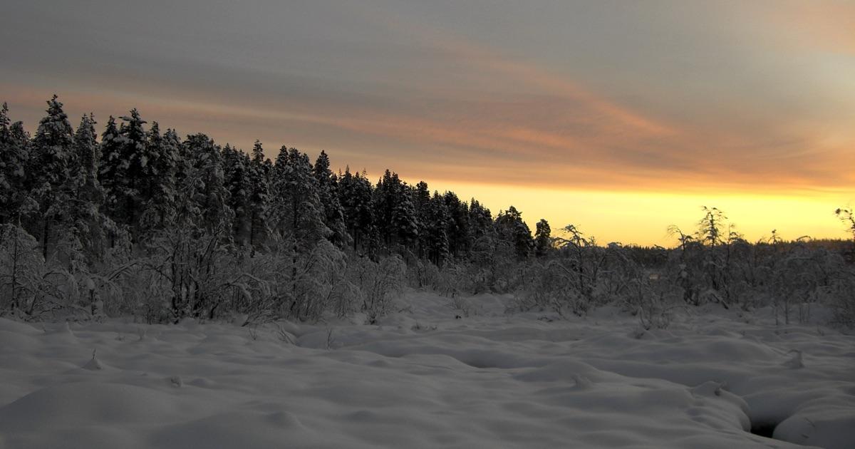 Schneebedeckte Landschaft in Lappland (Nordschweden) im Dezember 2007